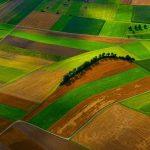 Реалізація лісової продукції на території України через державну офіційну платформу Прозорро.Продажі